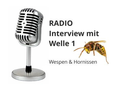 interview welle 1 wespen